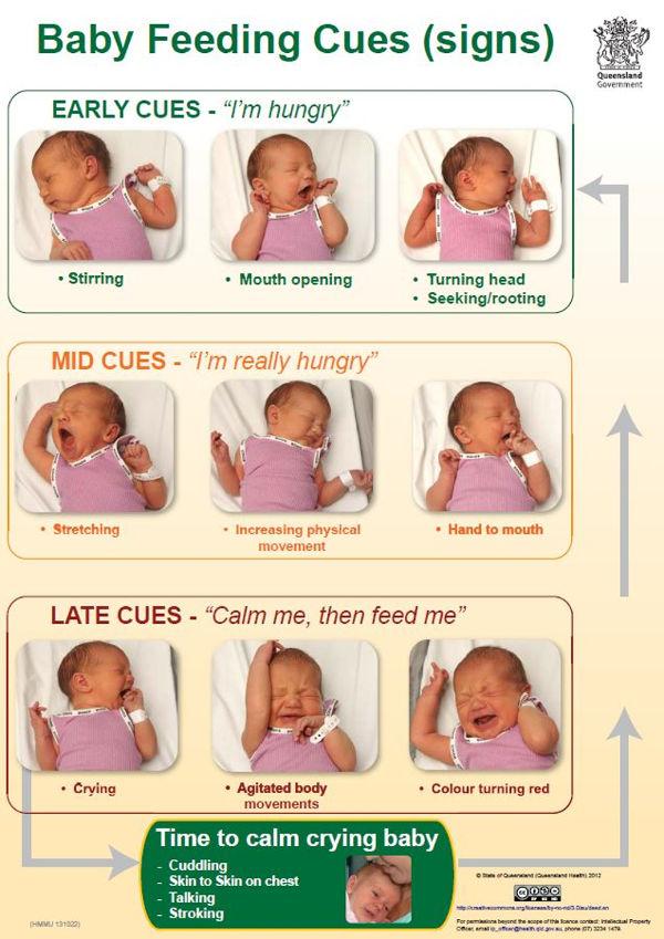 baby feeding cues1