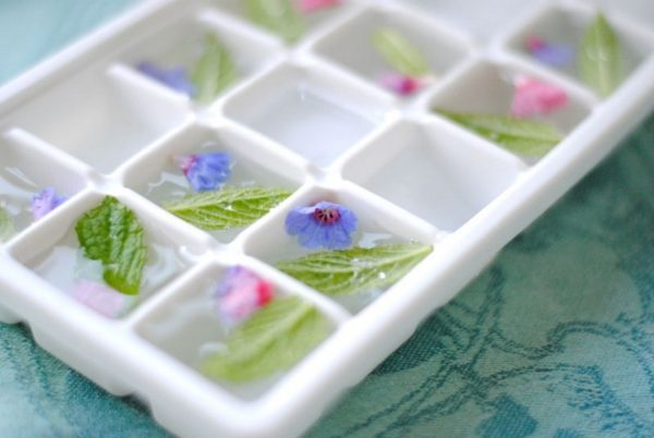 Freezing flowers in ice cube trays