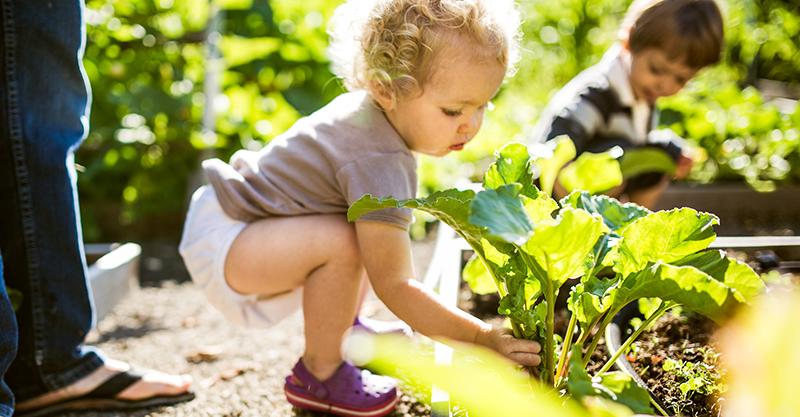 Toddler gardening