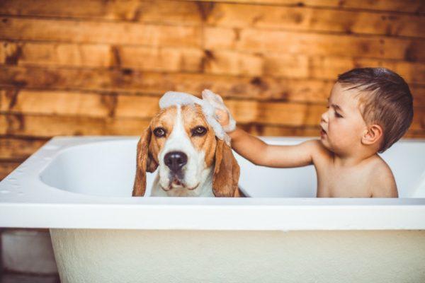 boy with dog bath