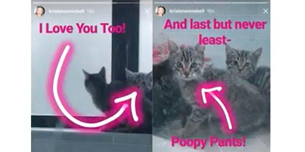 Kristen Bell kittens