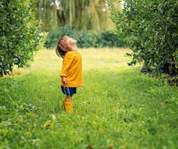 Young boy standing in orchard looking up - feature