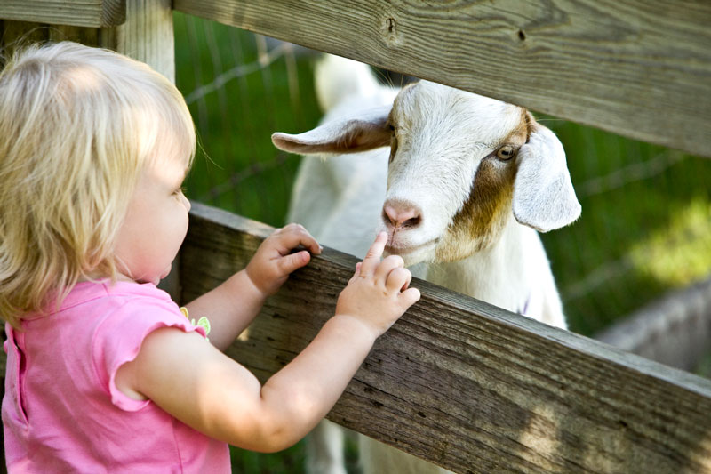 Girl with petting zoo goat