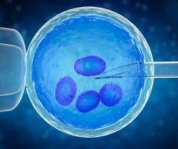 3d image of in vitro fertilization
