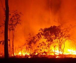 Bush fire in Australia