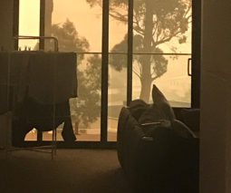 The view from the holiday home Jessica Macpherson was staying in during the fires