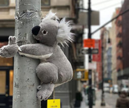 Stuffed koala on lamppost