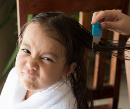 Girl having hair combed with a nit comb